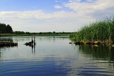 В реке Орель искали утопленника и не нашли