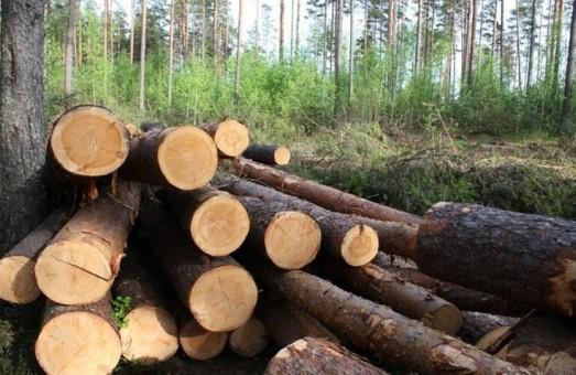 В Днепре продолжат массово вырубать деревья