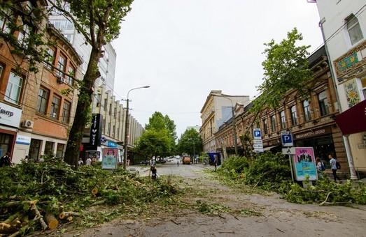 Улица Короленко превратится в сквер с десятками деревьев и велодорожками – мэрия (ФОТО)