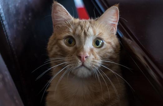 Кому можно «вынюхивать» в кабинете мэра: Филатов показал кота, живущего в горсовете (ВИДЕО)