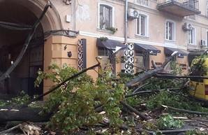 Сотни рухнувших деревьев и покореженных авто: последствия разгула стихии