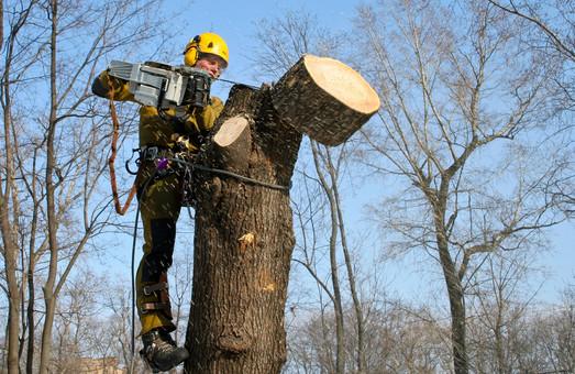 В Днепре введен полный мораторий на вырубку деревьев