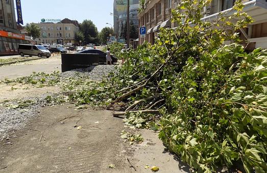 Обрезка и удаление деревьев: Разрешение выдает специальная комиссия мэрии