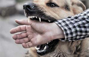За год жертвами нападения животных стали около тысячи жителей Днепра