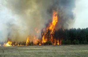 В Днепре сохраняется наивысший уровень пожароопасности – ГСЧС