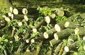 На Днепропетровщине задержали «черных лесорубов» (ФОТО)